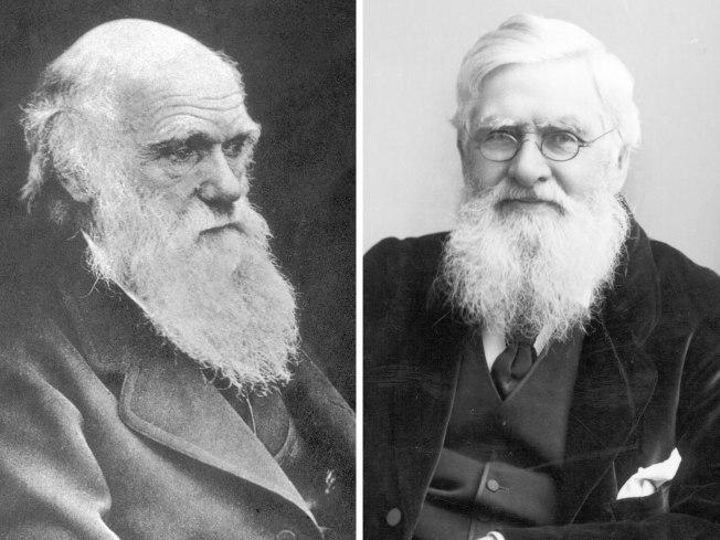 2016-04 - Nausicaa's Darwin & Wallace